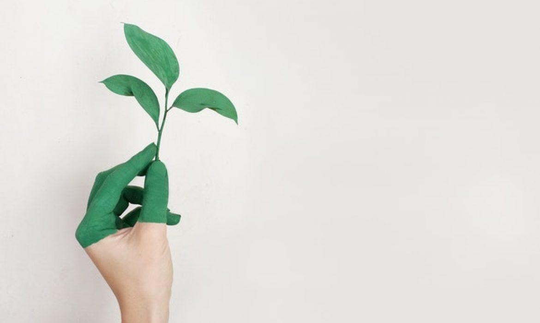 6 Instrumen Investasi yang Harus Diketahui oleh Investor Pemula Sebelum Mulai Menanam Dana